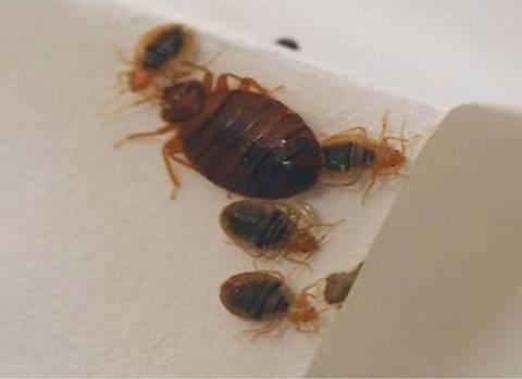 chuck newton: bed bug law niche