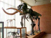 Mastodon640b